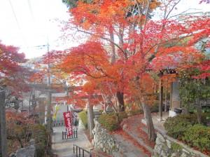 Saikouji Temple 3