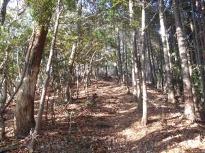 Tenjougatake Forest